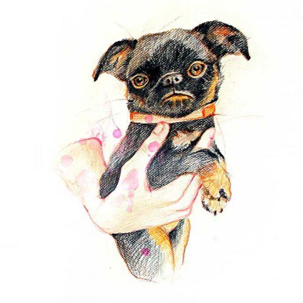 dog-cropped
